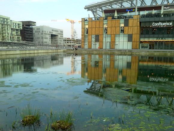Le centre commercial Confluence se reflète dans une mare avec joncs et canards