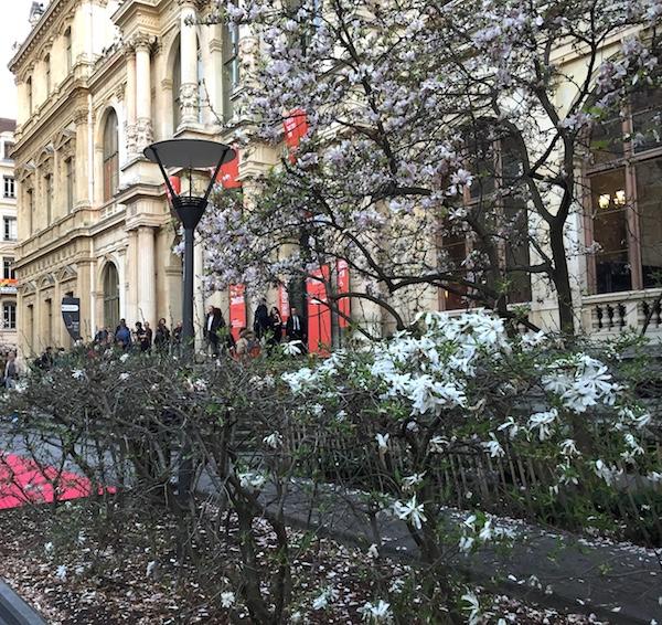 magnolias en fleurs devant hotel de la chambre de commerce Lyon