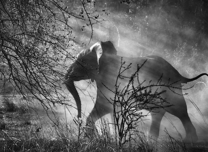 Photo Sebastião Salgado — Parc national de Kafue, Zambie. 2010.
